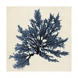 Coastal Seaweed IX Kunstdrucke von  Vision Studio