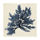 Coastal Seaweed IX Prints by  Vision Studio