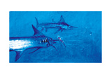 Two Striped Marlin and Three Pelagia Jellyfish, 2004 Giclee Print by Stanley Meltzoff