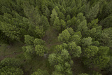 Aerial View of a Forest from a Hot Air Balloon Fotografie-Druck von Ami Vitale
