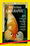 Cover of the April, 1973 National Geographic Magazine Photographic Print by Paul Zahl