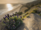 Flowers Along the Pacific Coast Highway in California Photographic Print by Jeff Mauritzen