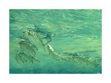 Bonefish Bibblin' in De Drougey Water, 1988 Giclee Print by Stanley Meltzoff