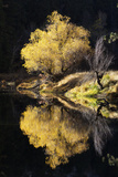A Scenic Autumn Landscape of a Willow Tree and its Reflection in the Merced River Photographic Print by Marc Moritsch