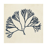 Coastal Seaweed VI Prints by  Vision Studio