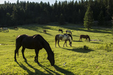 Horses Grazing in a Field Photographic Print by Ami Vitale