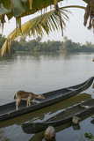 A Goat Waits on a Canoe Until its Owner Returns Photographic Print by Kelley Miller