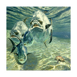 Four Permit and Coral Crab, 1987 Giclee Print by Stanley Meltzoff