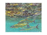 Bonefish and Shrimp Bait Giclee Print by Stanley Meltzoff