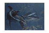 Broadbill, Mako and Sea Arrows, New Jersey, 1988 Giclee Print by Stanley Meltzoff