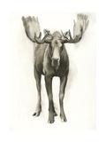Majestic Wildlife I Art by Grace Popp