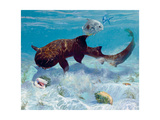 Nurse Shark, Two Conch, Two Permit, Starfish, 1993 Giclee Print by Stanley Meltzoff