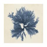 Coastal Seaweed V Giclée-Premiumdruck von  Vision Studio