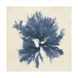 Coastal Seaweed V Posters by  Vision Studio