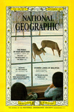 Cover of the November, 1963 National Geographic Magazine Photographic Print by Albert Moldvay