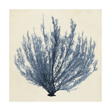 Coastal Seaweed III Prints by  Vision Studio