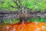 An Ogeechee Tupelo Tree Grows as an Island in the Suwannee River Photographic Print by Carlton Ward