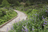 A Walkway Through Point Reyes National Seashore in Marin County, California Photographic Print by Jeff Mauritzen