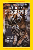 Mother Tiger Carrying Her Cub; Cover of 12-1997 Ng Magazine Photographic Print by Michael Nichols