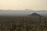 A Border Patrol Helicopter Looking for Illegal Activity in Organ Pipe Cactus National Monument Photographic Print by Bill Hatcher
