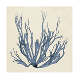 Coastal Seaweed I Prints by  Vision Studio