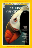 Cover of the March 1979 National Geographic Magazine Photographic Print by Bates Littlehales