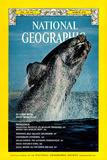 Cover of the March, 1976 National Geographic Magazine Photographic Print by Des & Jen Bartlett