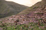 A Herd of Llamas, Alpacas and Sheep Round a Mountain Bend in Peru Reprodukcja zdjęcia autor Erika Skogg