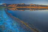 Eastern Sierra Nevada Crest Reflects in Big Alkali Lake, Long Valley Near Mammoth Lakes, California Photographic Print by Gordon Wiltsie