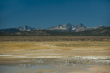 Gulls Rest by an Alkaline Pond in the Sierra Nevada Near Mammoth Lakes, California Photographic Print by Gordon Wiltsie