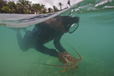 Miskito Indian Dives for Lobsters in the Coral Reefs Off the Gracias a Dios Municipality, Honduras Photographic Print by Cristina Mittermeier
