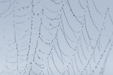 A Spider Web Detail in Early Morning at Oregon Dunes National Recreation Area Photographic Print by Phil Schermeister