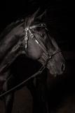 Portrait of a Lusitano Stallion in a Dark Arena Photographic Print by Jak Wonderly