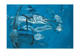 Two Striped Marlin and Pompano, Cabo San Lucas: Striped Marlin Work as a Team to Round Up Pompano Giclee Print by Stanley Meltzoff