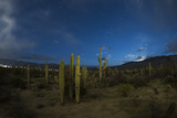 Saguaro National Park During an Approaching Storm and Tucson Lights, Tucson, Arizona Photographic Print by Bill Hatcher