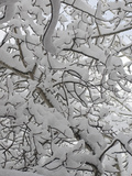 New Snow Covers Branches of an Aspen Tree Near Bozeman, Montana Lámina fotográfica por Gordon Wiltsie