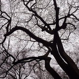 Trees in a Park in New York City Photographic Print by Sean Gallagher