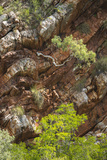 A Tree Grows Sideways Out of a Cliff in Talbot Bay, Western Australia Photographic Print by Jeff Mauritzen