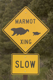 A Marmot Crossing Sign in Great Basin National Park Photographic Print by Phil Schermeister