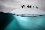 Chinstrap Penguins on an Ice Floe Off the Coast of Dank Island Fotografie-Druck von David Doubilet