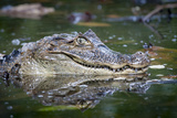 Close Up Portrait of a Crocodilian Photographic Print by Robin Moore