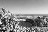 A Scenic Infrared View of Shrubs in Bloom on a State Park Beach on Long Island Sound Photographic Print by Donna O'Meara