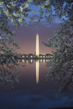 Cherry Blossoms Framing the Washington Monument and the Tidal Basin at Twilight Photographic Print by Irene Owsley