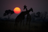 Two Giraffes Silhouetted Against the Setting Sun Fotografisk tryk af Beverly Joubert