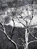 Farmland in the Valley Below, Seen Through Snow-Covered Tree Branches Photographic Print by Petteway, Amy, Al White