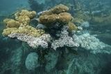Coral Reef on the Mosquitia Coast Photographic Print by Cristina Mittermeier