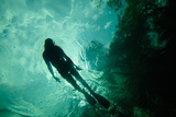 A Swimmer Explores Blue Spring, the Largest Spring in the Saint Johns River Watershed Photographic Print by Carlton Ward