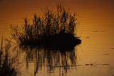 Silhouetted Reeds in a Spillway at Sunset Photographic Print by Beverly Joubert