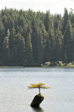 A Lone Tree in a Lake Photographic Print by Cesare Naldi