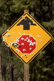 A Stop Sign with Bullet Holes in the Rogue River National Forest Photographic Print by Phil Schermeister